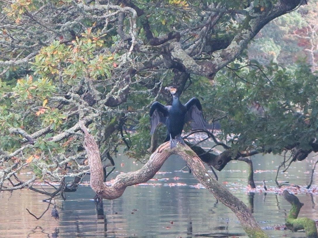 Helford River Wildlife Watch – September